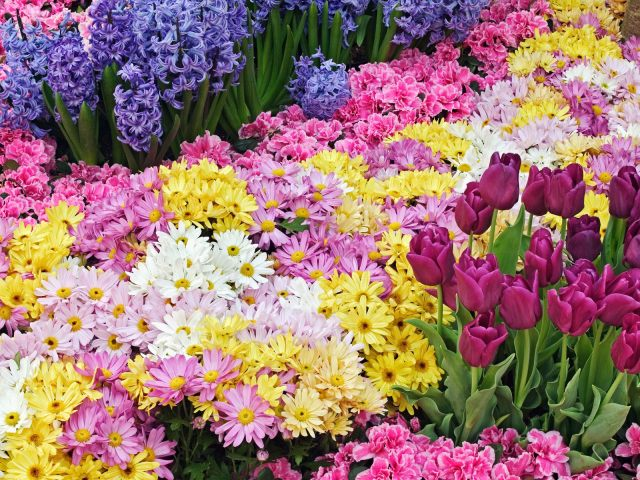 Primavera fiori-sfondi%20(2)