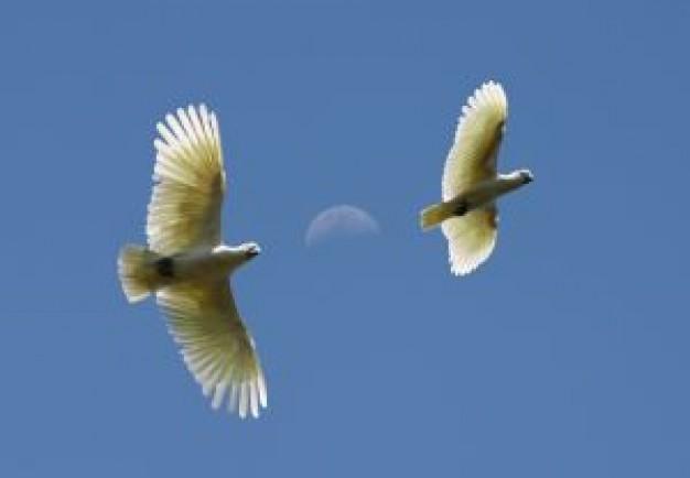 uccelli-in-volo-di-luna_2707329