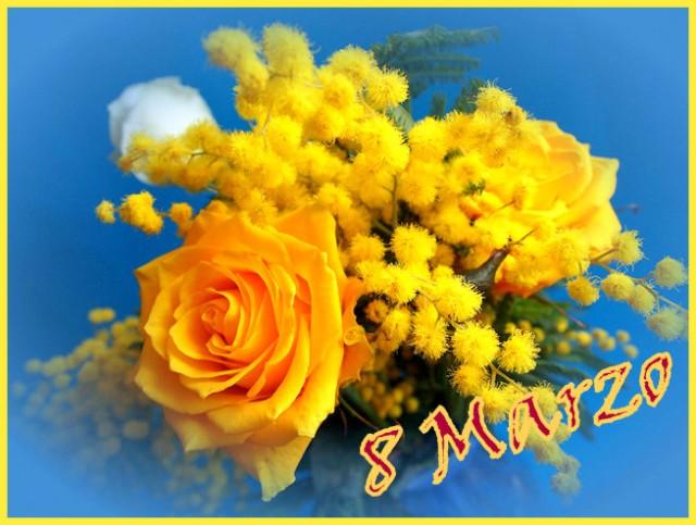1-Mimosa 2