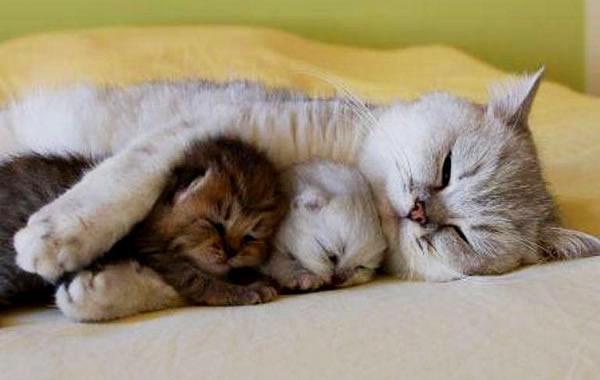gatta-abbraccia